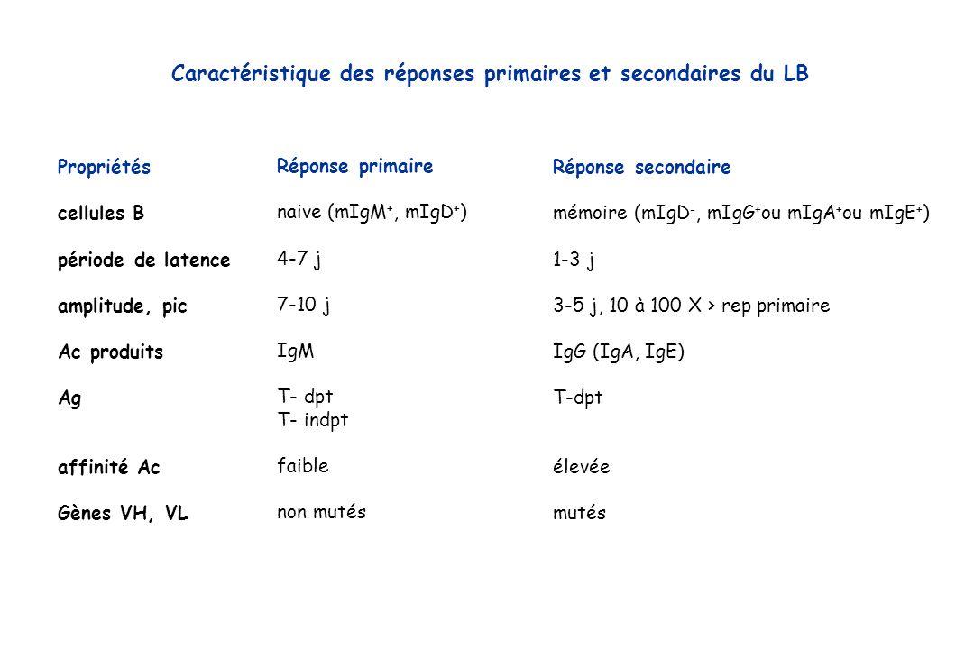 Réponse secondaire mémoire (mIgD -, mIgG + ou mIgA + ou mIgE + ) 1-3 j 3-5 j, 10 à 100 X > rep primaire IgG (IgA, IgE) T-dpt élevée mutés Réponse prim