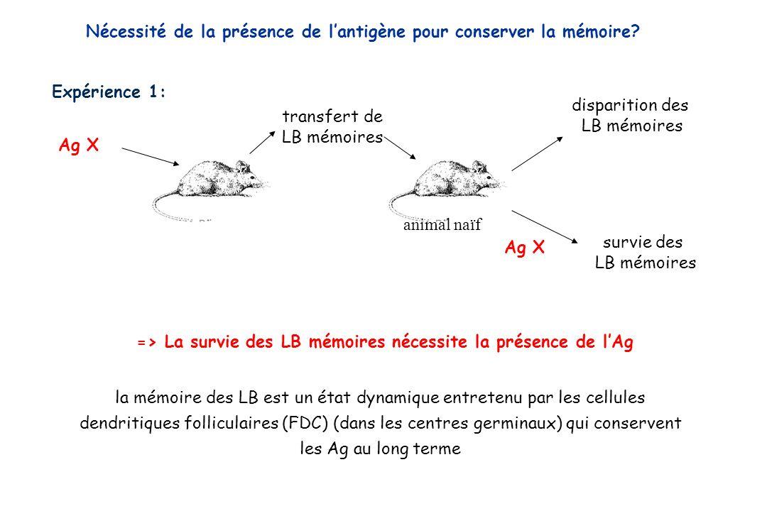 Expérience 1: Ag X disparition des LB mémoires transfert de LB mémoires animal naïf survie des LB mémoires Ag X => La survie des LB mémoires nécessite