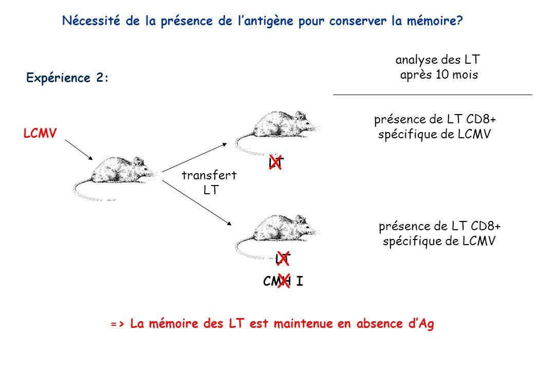 Expérience 2: LCMV transfert LT présence de LT CD8+ spécifique de LCMV présence de LT CD8+ spécifique de LCMV analyse des LT après 10 mois => La mémoi