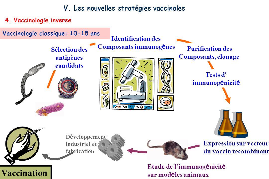 Vaccination D é veloppement industriel et fabrication Etude de l immunog é nicit é sur mod è les animaux Expression sur vecteurs du vaccin recombinant