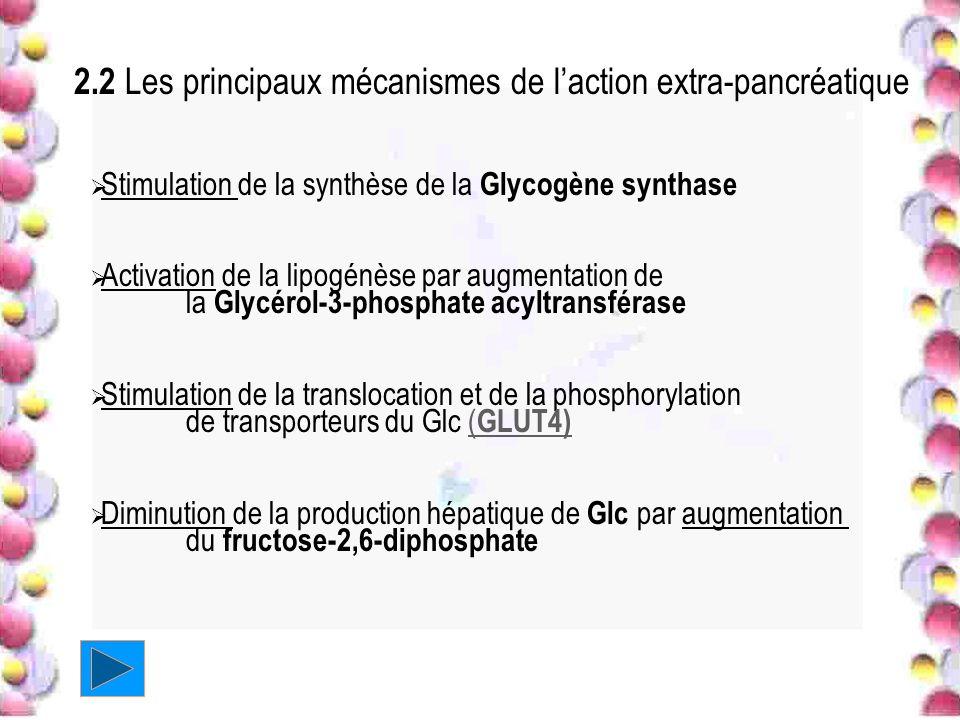 2.2 Les principaux mécanismes de laction extra-pancréatique Stimulation de la synthèse de la Glycogène synthase Activation de la lipogénèse par augmen