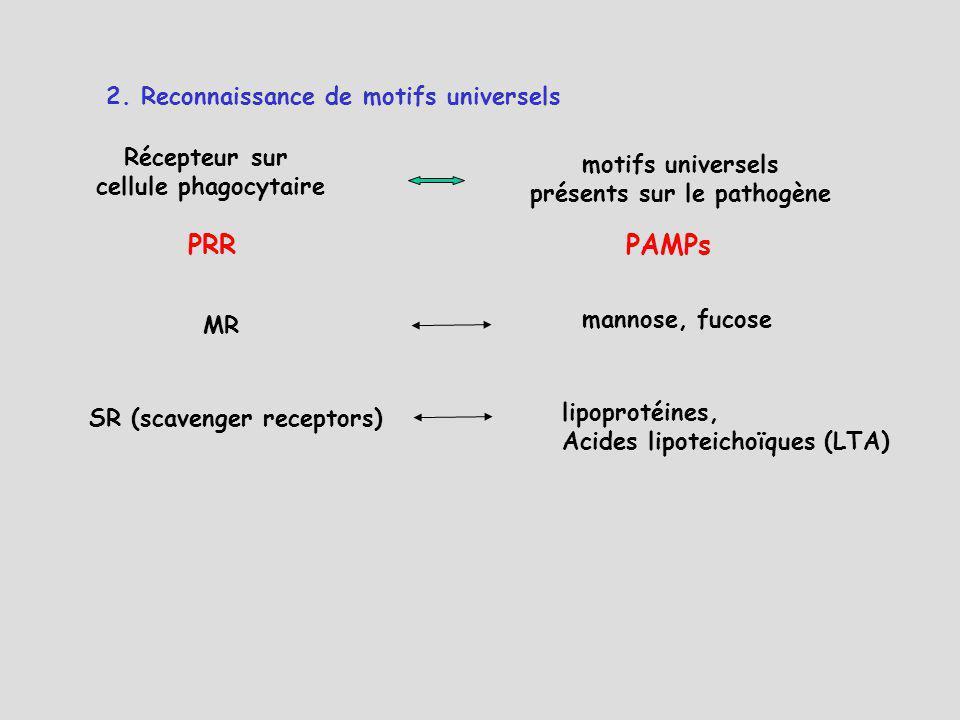 mannose, fucose MR lipoprotéines, Acides lipoteichoïques (LTA) SR (scavenger receptors) motifs universels présents sur le pathogène Récepteur sur cell