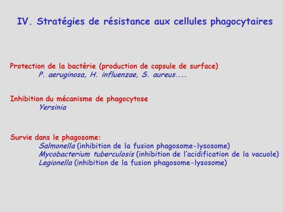 IV. Stratégies de résistance aux cellules phagocytaires Protection de la bactérie (production de capsule de surface) P. aeruginosa, H. influenzae, S.