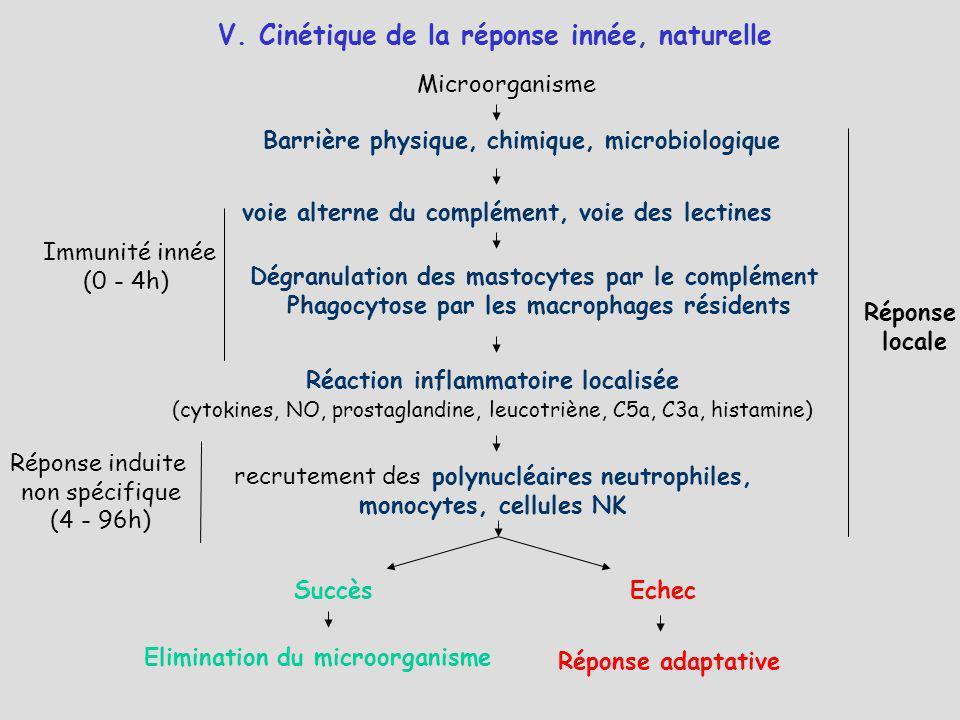 V. Cinétique de la réponse innée, naturelle Immunité innée (0 - 4h) Réponse induite non spécifique (4 - 96h) Réponse locale Microorganisme Barrière ph