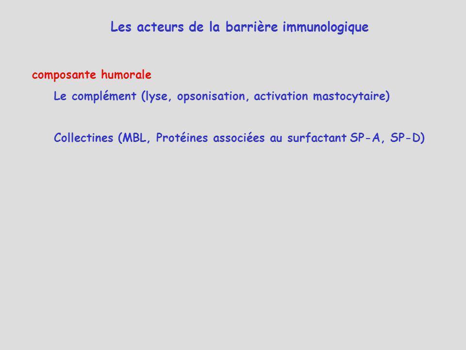 Les acteurs de la barrière immunologique composante humorale Le complément (lyse, opsonisation, activation mastocytaire) Collectines (MBL, Protéines a