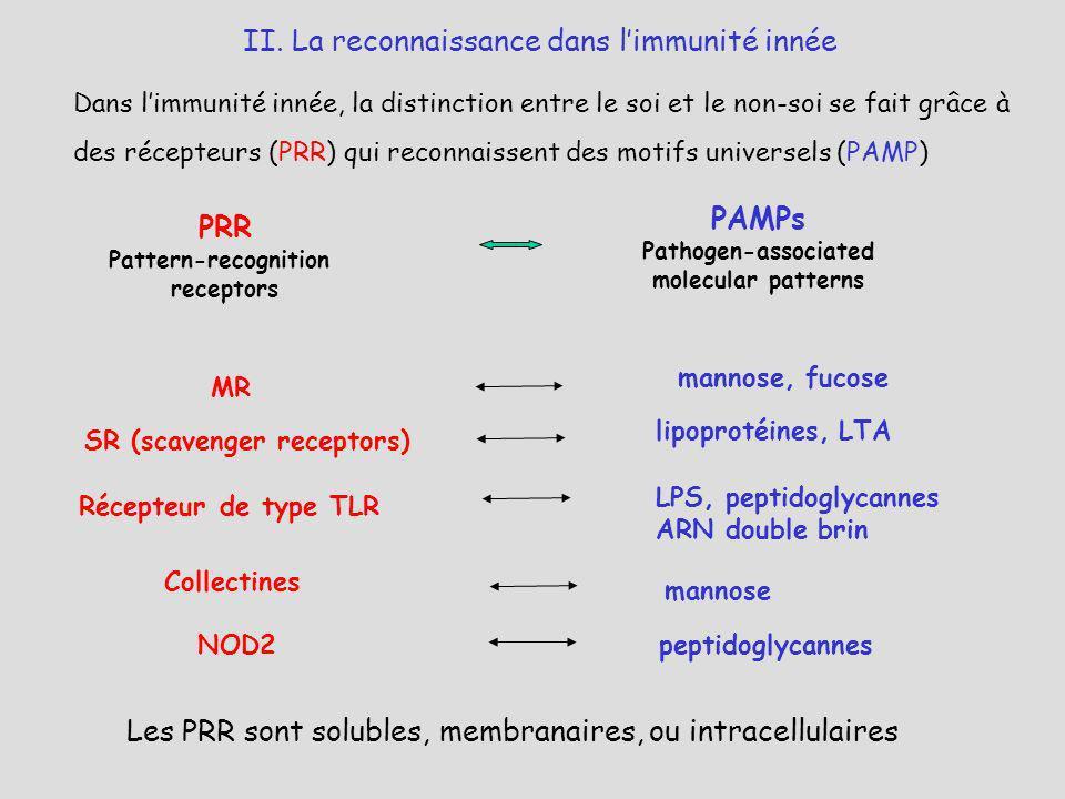 Dans limmunité innée, la distinction entre le soi et le non-soi se fait grâce à des récepteurs (PRR) qui reconnaissent des motifs universels (PAMP) PR