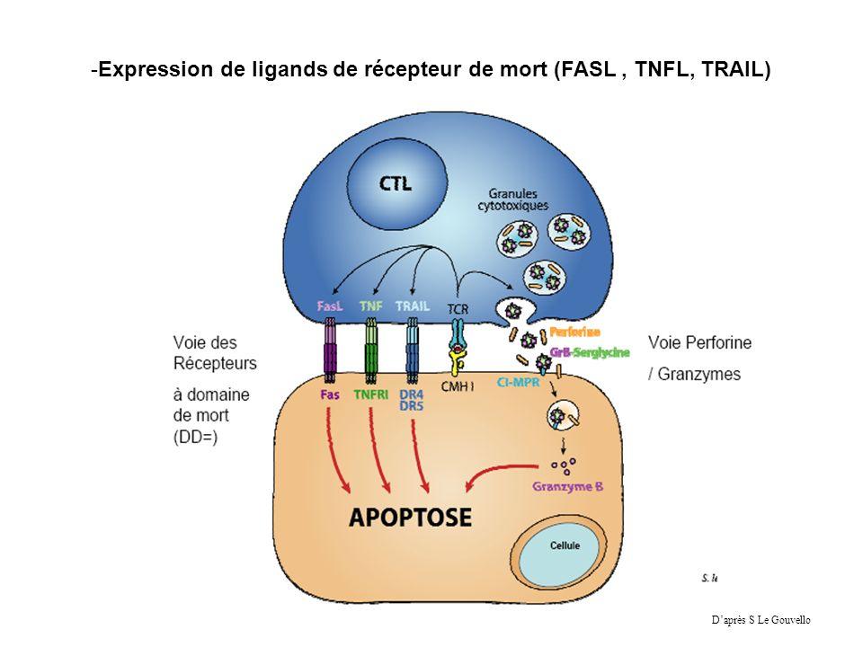 -Expression de ligands de récepteur de mort (FASL, TNFL, TRAIL) Daprès S Le Gouvello