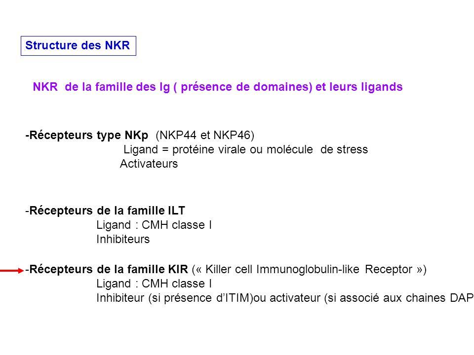 Structure des NKR NKR de la famille des Ig ( présence de domaines) et leurs ligands -Récepteurs type NKp (NKP44 et NKP46) Ligand = protéine virale ou