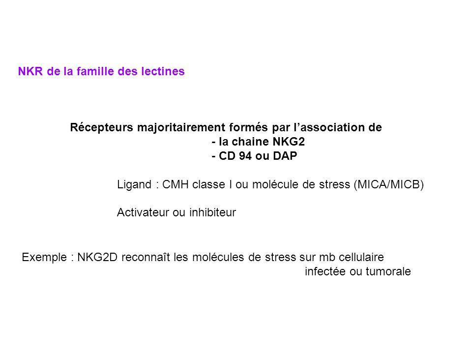 NKR de la famille des lectines Récepteurs majoritairement formés par lassociation de - la chaine NKG2 - CD 94 ou DAP Ligand : CMH classe I ou molécule