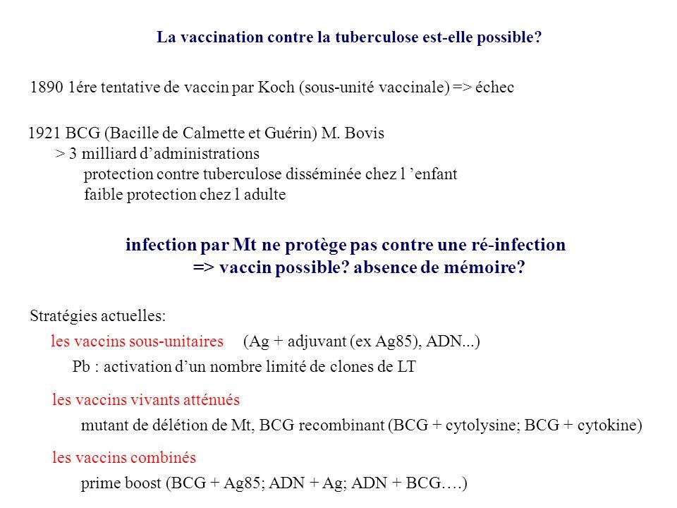 La vaccination contre la tuberculose est-elle possible? 1890 1ére tentative de vaccin par Koch (sous-unité vaccinale) => échec 1921 BCG (Bacille de Ca