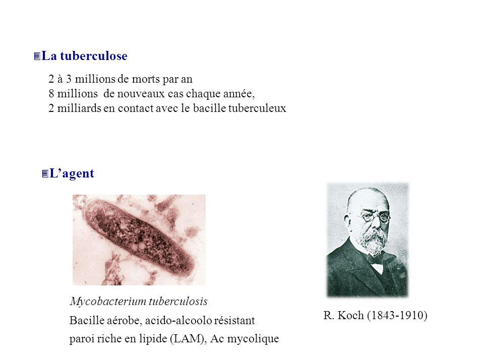 Chez immunocompétents <10% des individus infectés avec Mt développent la maladie (tuberculose pulmonaire) => dans 90% des cas le système immunitaire contrôle le pathogène La maladie Chez immunodéficients (HIV+) primo-infection et réactivation, dissémination => existence de gènes de susceptibilité NRAMP1 (natural resistance-associated macrophage protein), récepteur à la vitamine D, Mannose Binding Protein Les différentes formes de tuberculose Tuberculose pulmonaire Tuberculose miliaire: dissémination hématogène tuberculose osseuse, génito-urinaires, méningée, hématopoïétique