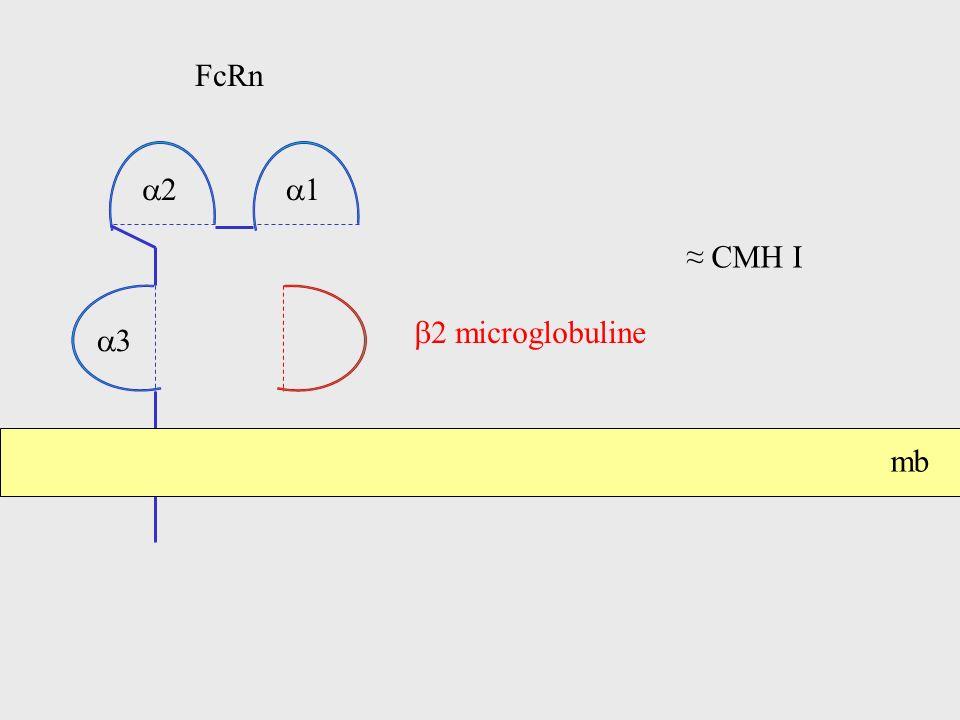 2 microglobuline FcRn 1 2 3 mb CMH I
