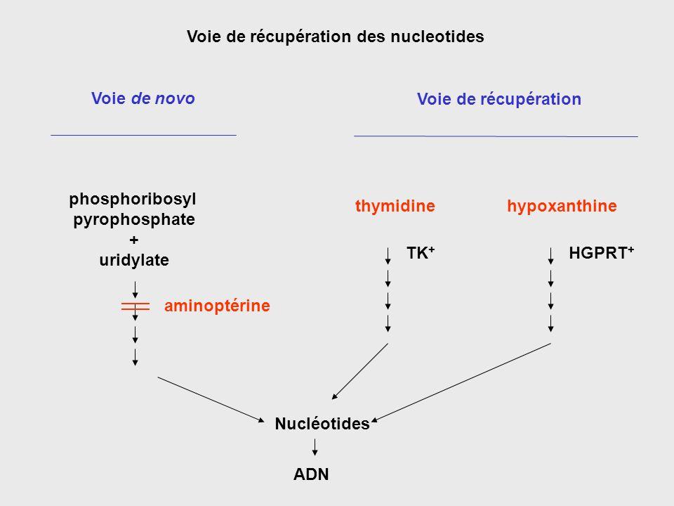 Voie de récupération des nucleotides Voie de novo Voie de récupération thymidinehypoxanthine phosphoribosyl pyrophosphate + uridylate HGPRT + TK + ami