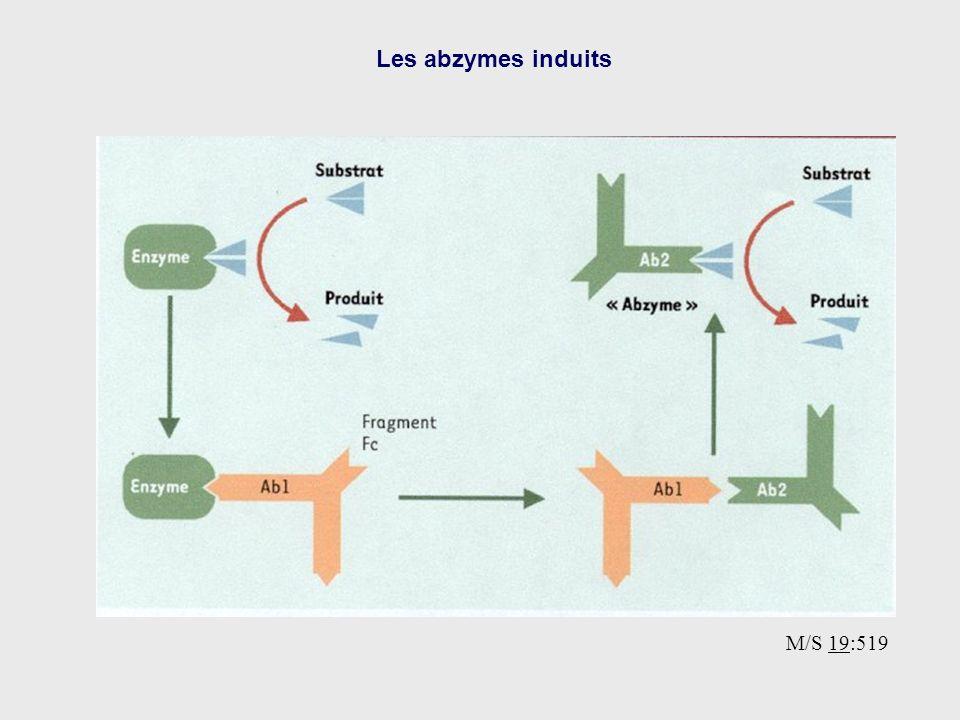 Les abzymes induits M/S 19:519