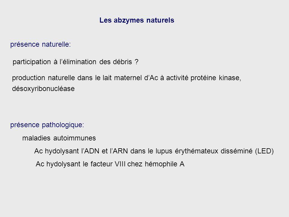 Les abzymes naturels production naturelle dans le lait maternel dAc à activité protéine kinase, désoxyribonucléase présence naturelle: présence pathol