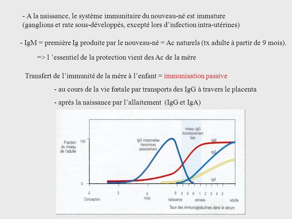 Transfert de limmunité de la mère à lenfant = immunisation passive - au cours de la vie fœtale par transports des IgG à travers le placenta - après la