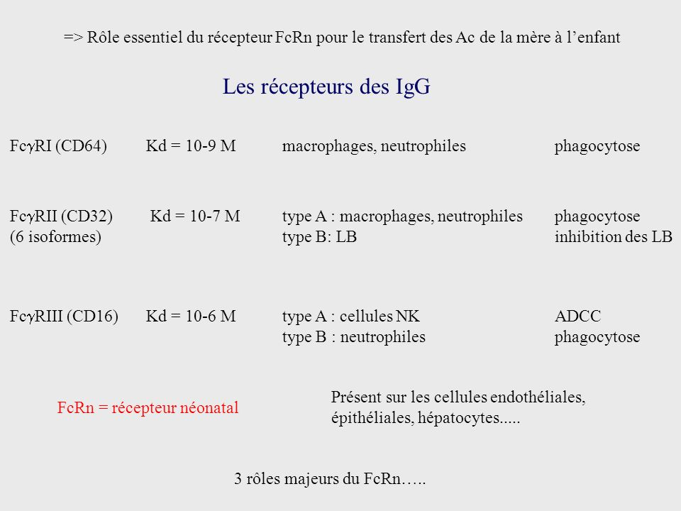 Les récepteurs des IgG Fc RI (CD64)Kd = 10-9 Mmacrophages, neutrophilesphagocytose Fc RII (CD32) Kd = 10-7 M type A : macrophages, neutrophilesphagocy