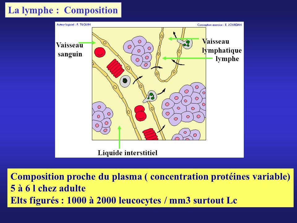 Vaisseau sanguin Vaisseau lymphatique Liquide interstitiel lymphe La lymphe : Composition Composition proche du plasma ( concentration protéines varia