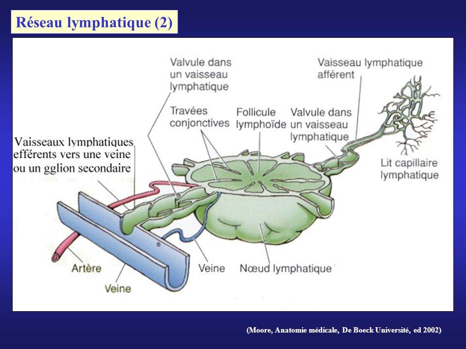 (Moore, Anatomie médicale, De Boeck Université, ed 2002) Réseau lymphatique (2)