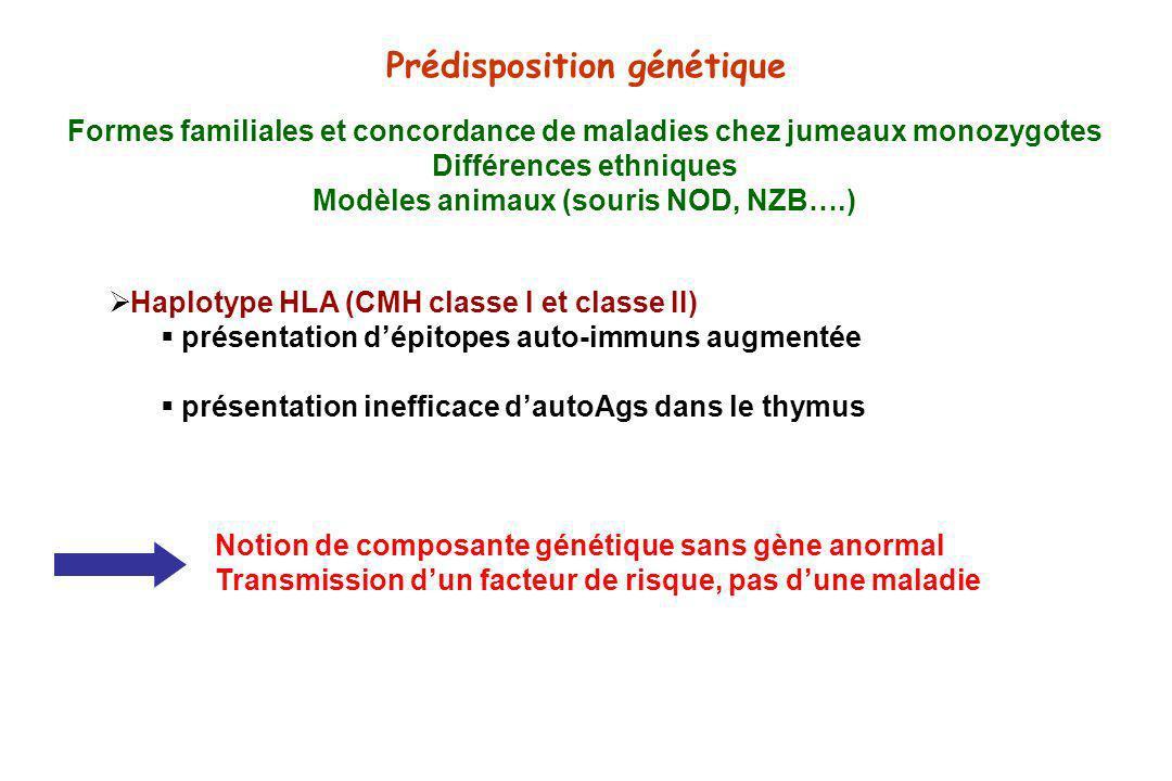 Prédisposition génétique Haplotype HLA (CMH classe I et classe II) présentation dépitopes auto-immuns augmentée présentation inefficace dautoAgs dans