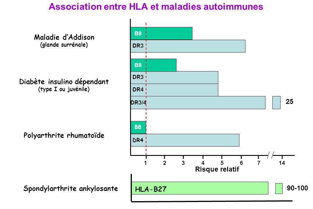 Maladie dAddison (glande surrénale) B8 DR3 Polyarthrite rhumatoïde B8 DR4 Diabète insulino dépendant (type I ou juvénile) DR3 DR4 DR3/4 B8 Association