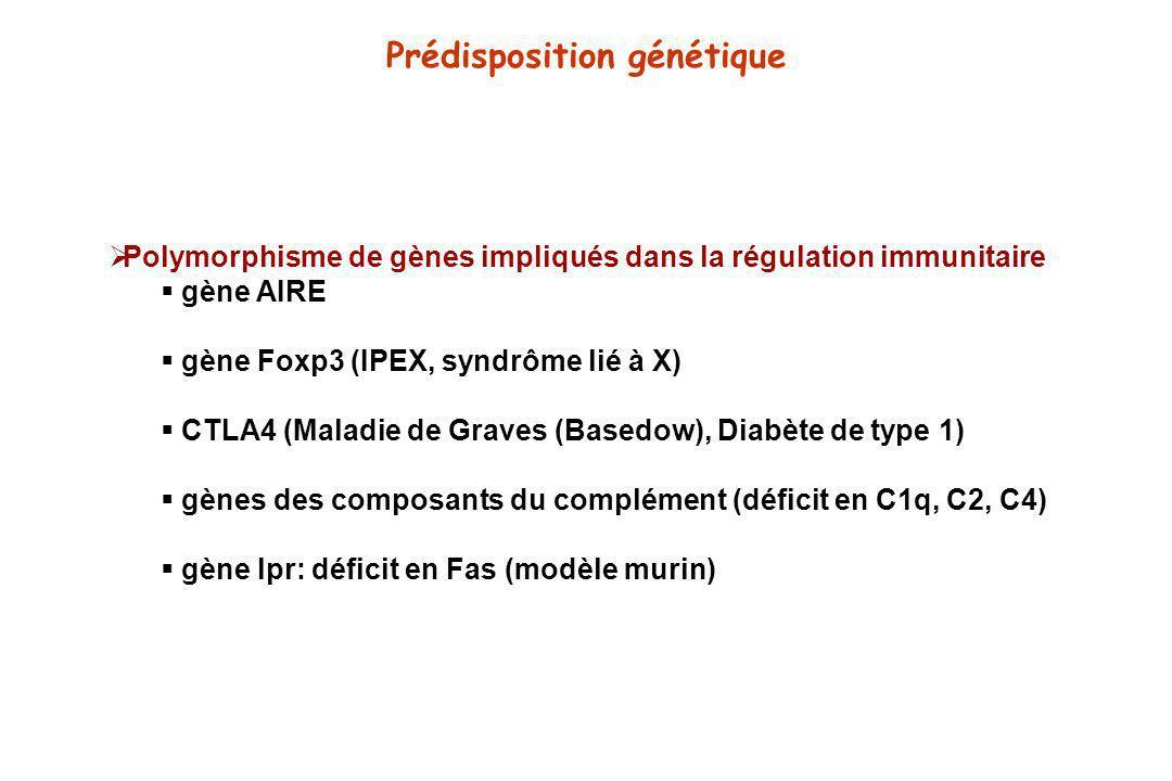 Prédisposition génétique Polymorphisme de gènes impliqués dans la régulation immunitaire gène AIRE gène Foxp3 (IPEX, syndrôme lié à X) CTLA4 (Maladie