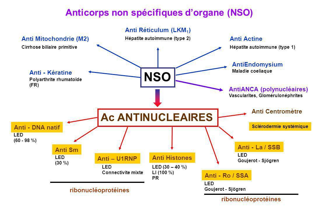 Anticorps non spécifiques dorgane (NSO) Sclérodermie systémique Anti Centromètre LED (60 - 98 %) Anti - DNA natif LED Goujerot - Sjögren Anti - La / S