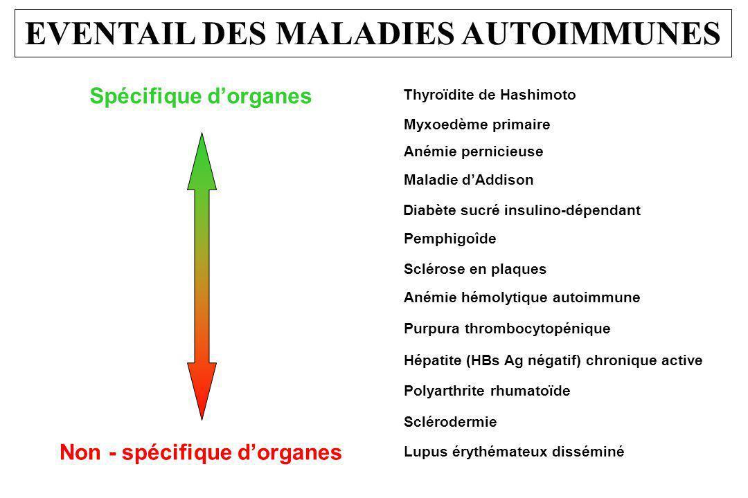 EVENTAIL DES MALADIES AUTOIMMUNES Thyroïdite de Hashimoto Myxoedème primaire Anémie pernicieuse Maladie dAddison Diabète sucré insulino-dépendant Pemp