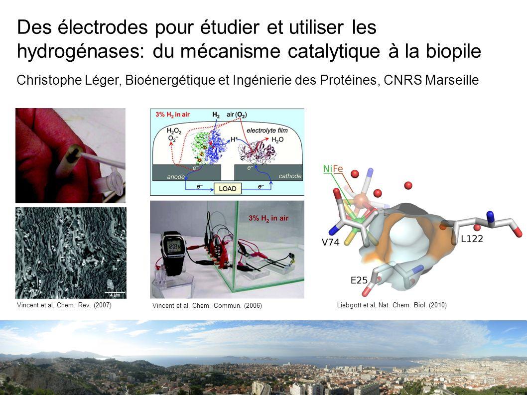 1atm H 2, électrode tournante, haute vitesse de balayage: 200mV/s (un cycle en 8s) Léger et al., Biochemistry 41 15736 (2002), J.