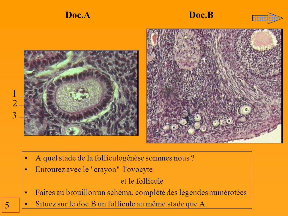 5 Doc.A Doc.B 1 2 3 A quel stade de la folliculogénèse sommes nous ? Entourez avec le
