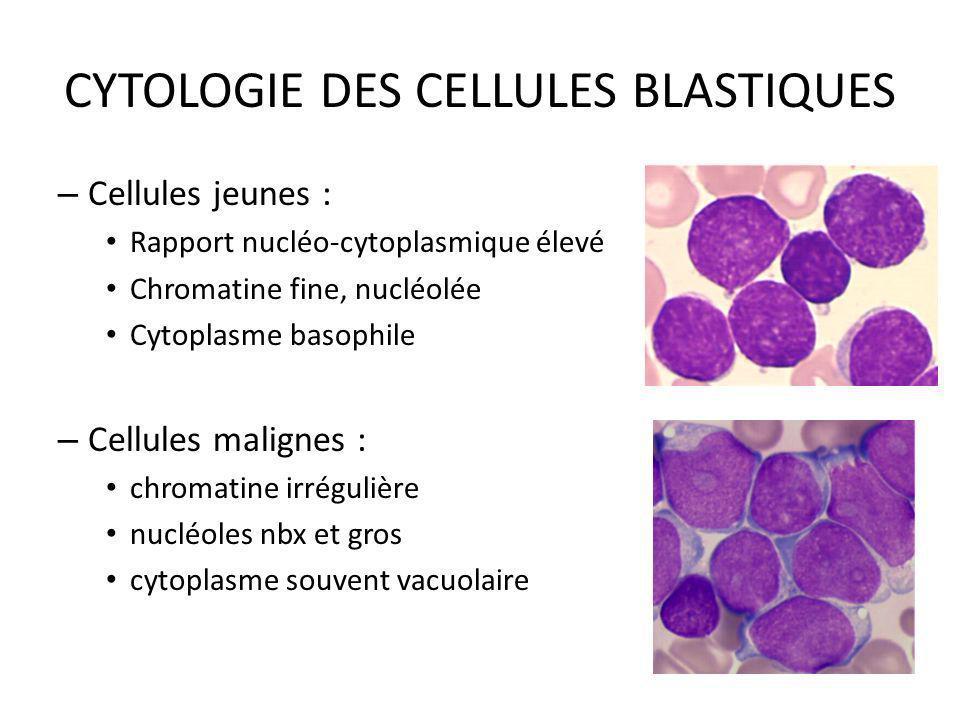CYTOLOGIE DES CELLULES BLASTIQUES – Cellules jeunes : Rapport nucléo-cytoplasmique élevé Chromatine fine, nucléolée Cytoplasme basophile – Cellules ma