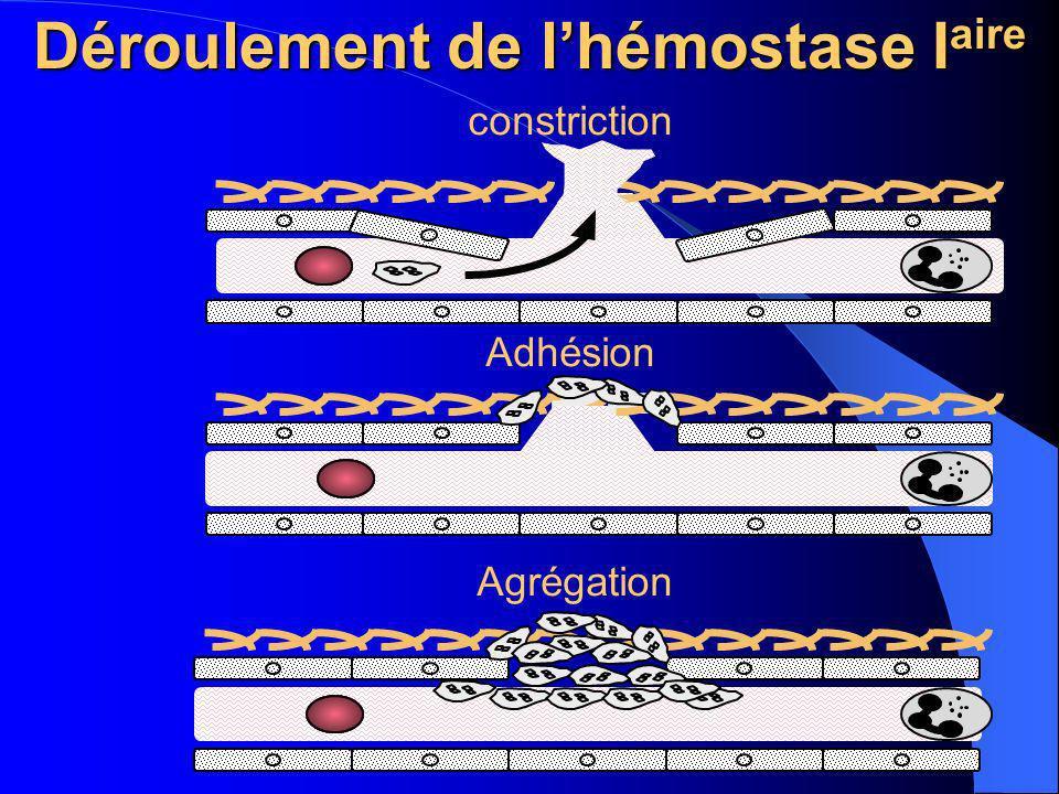 Déroulement de lhémostase I aire constriction Adhésion Agrégation