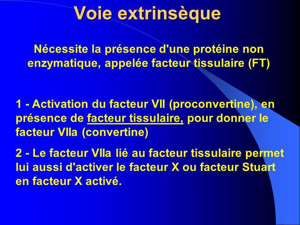 Voie extrinsèque 1 - Activation du facteur VII (proconvertine), en présence de facteur tissulaire, pour donner le facteur VIIa (convertine) 2 - Le fac