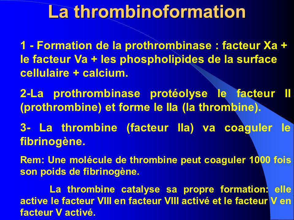 La thrombinoformation 1 - Formation de la prothrombinase : facteur Xa + le facteur Va + les phospholipides de la surface cellulaire + calcium. 2-La pr
