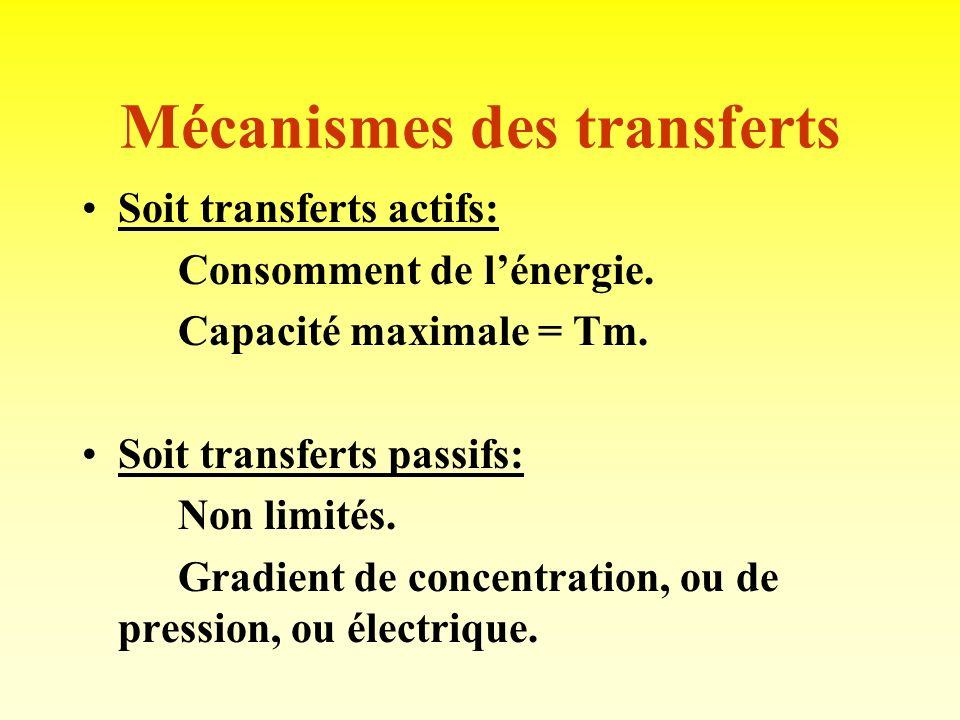 3) TRANSFERTS TUBULAIRES Quantitativement très importants: 180 litres filtrés chaque jour, à 99 % réabsorbés. Transferts de solutés. Transferts hydriq