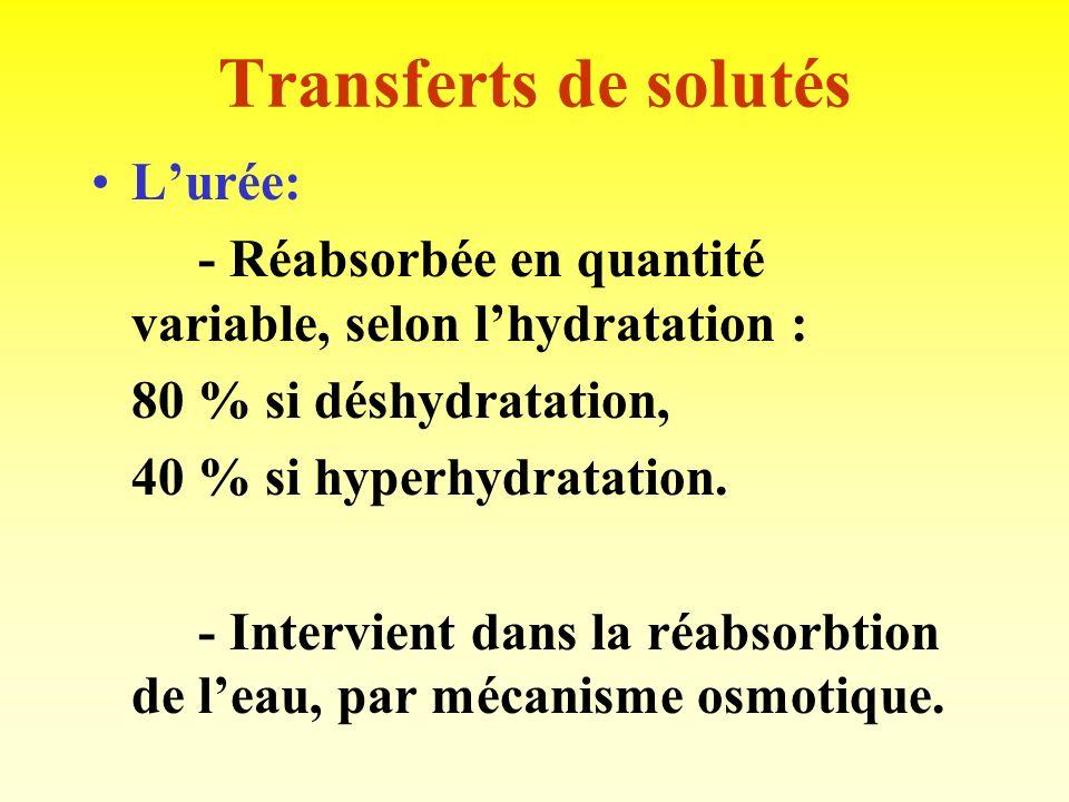 Transferts de solutés Le potassium (K+): - totalement filtré, puis réabsorbé à 95 % ( TP et AH). - sécrétion au niveau TD, influencée par: Apports de
