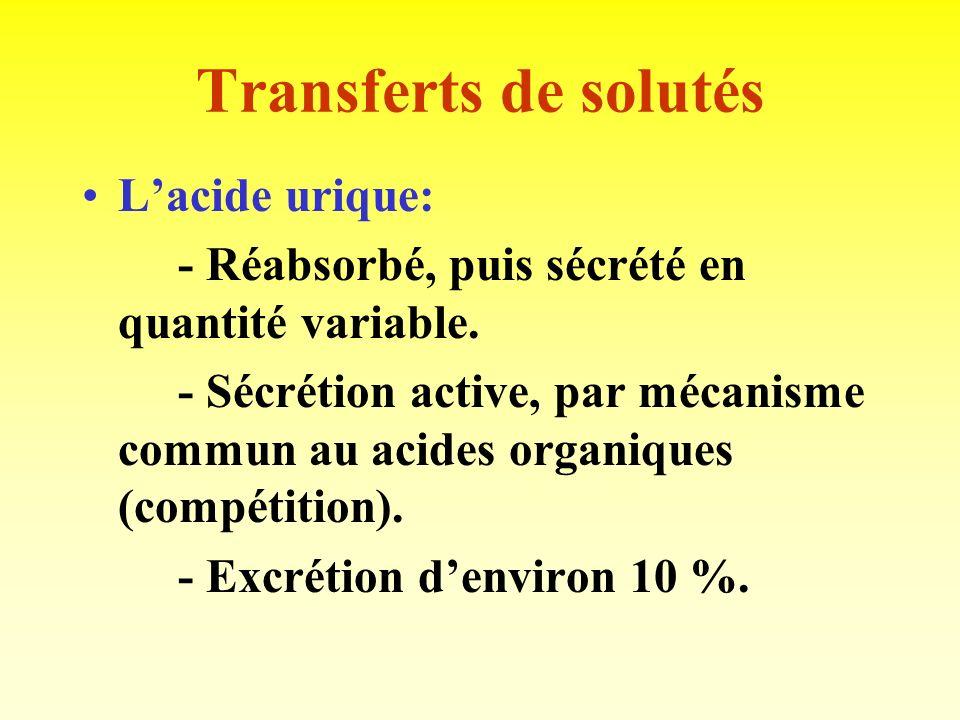 Transferts de solutés Lurée: - Réabsorbée en quantité variable, selon lhydratation : 80 % si déshydratation, 40 % si hyperhydratation. - Intervient da