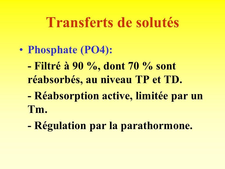 Transferts de solutés Calcium (Ca++): - 75 % du Ca plasmatique filtré, puis 95 % réabsorbé (60% TP, 20% AH, 10% TD). - Régulation par la parathormone