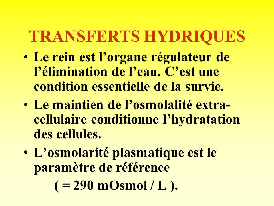 Transferts de solutés Acides aminés et proteines: Les acides aminés sont filtrés, ainsi quune faible quantité de proteines (albumine). La quasi-totali