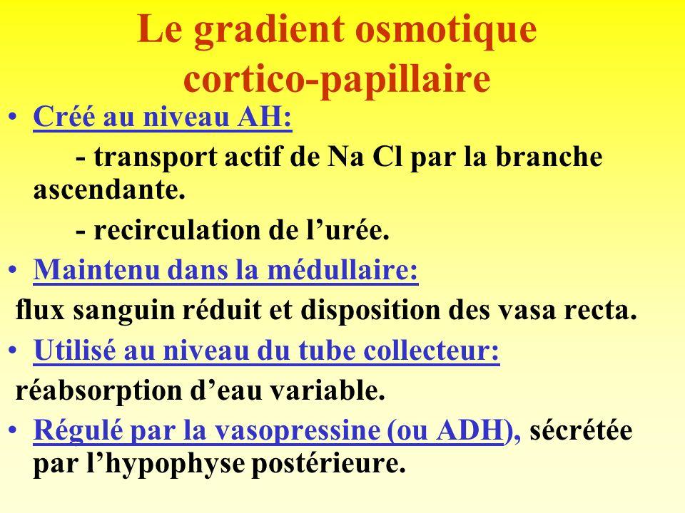 Concentration / dilution de lurine Urine < plasma: = diluée, ou hypotonique. 50 mOsmol / L. Urine > plasma: = concentrée, ou hypertonique. 1200 mOsmol