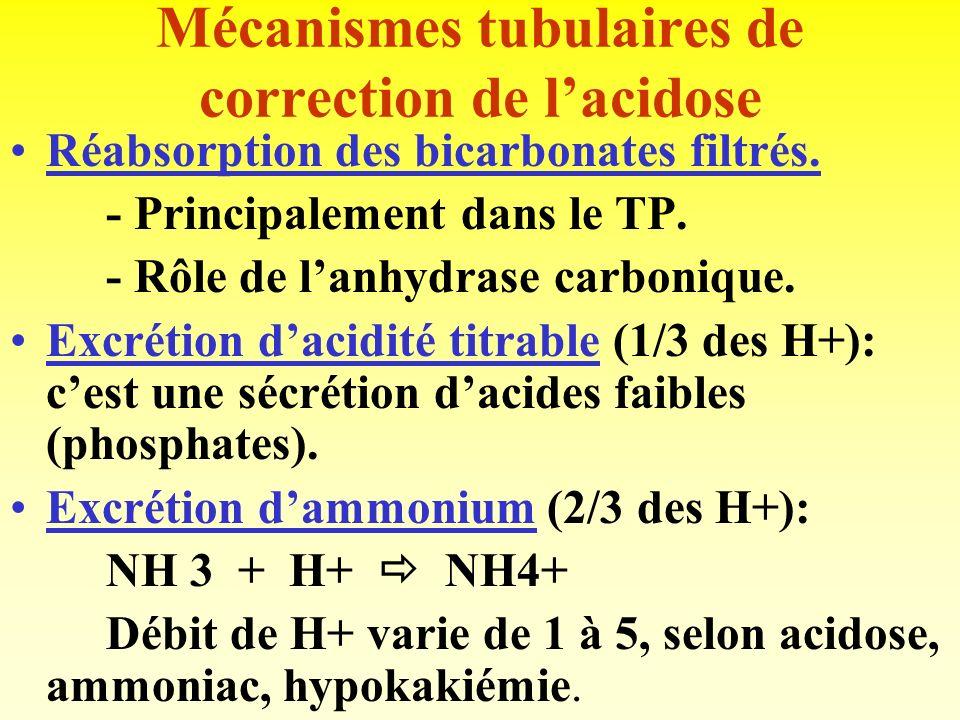 TUBE RENAL et EQUILIBRE ACIDO-BASIQUE Le rein est responsable de la composante métabolique, alors que le poumon assure la composante respiratoire. Le