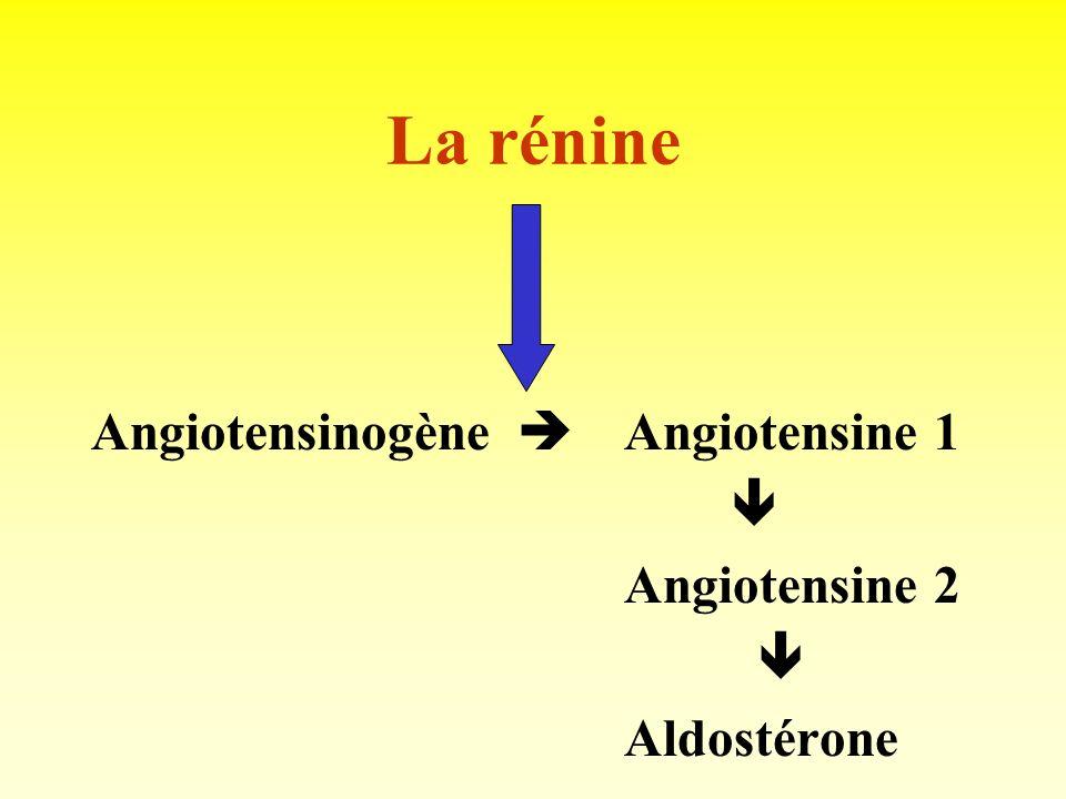 Rôle endocrine du rein Rénine. Kallikréine. Prostaglandines. Endothéline. Erythropoiétine. Hydroxy-vitamine D.