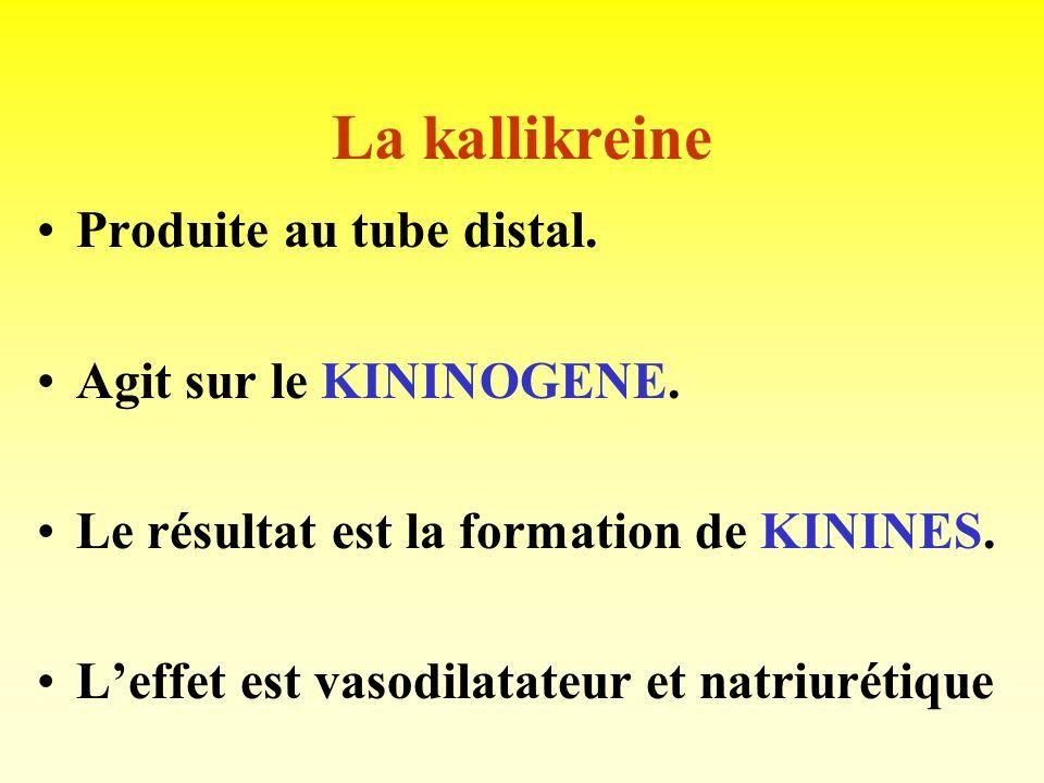 La rénine Produite au niveau de lappareil juxta-glomérulaire ( cellules granuleuses de la paroi de lartériole afférente). Enzyme-clé dans le contrôle