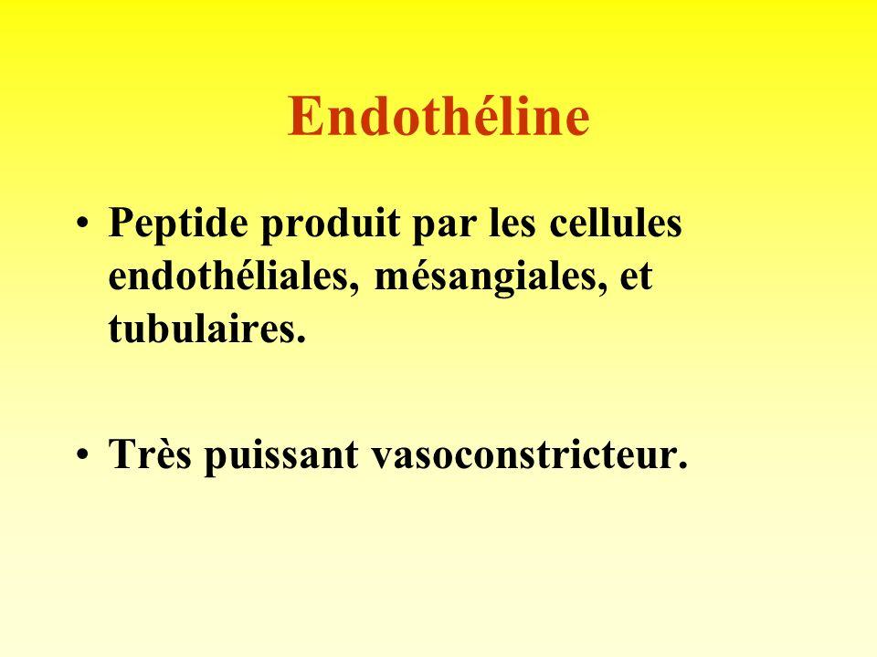 Prostaglandines Produites dans tout lorganisme, en particulier le rein (interst., glomér., et collecteur). Actions multiples: - vasodilatatrices ( PGE