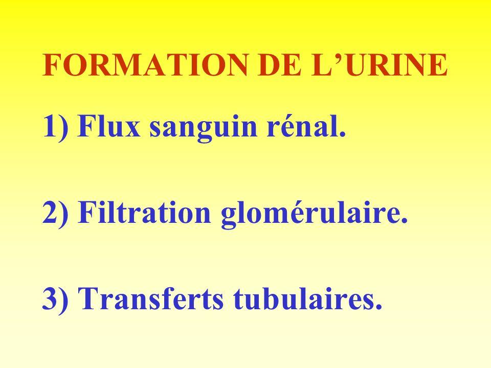 Transferts de solutés Lurée: - Réabsorbée en quantité variable, selon lhydratation : 80 % si déshydratation, 40 % si hyperhydratation.