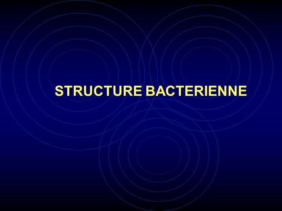 MOYENS DETUDE LE MICROSCOPE OPTIQUE renseigne sur la forme des bactéries et leur mobilité éventuelle.
