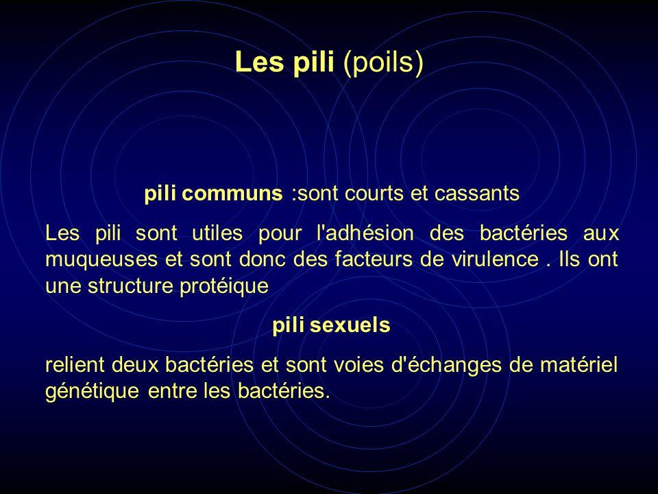 pili communs :sont courts et cassants Les pili sont utiles pour l'adhésion des bactéries aux muqueuses et sont donc des facteurs de virulence. Ils ont