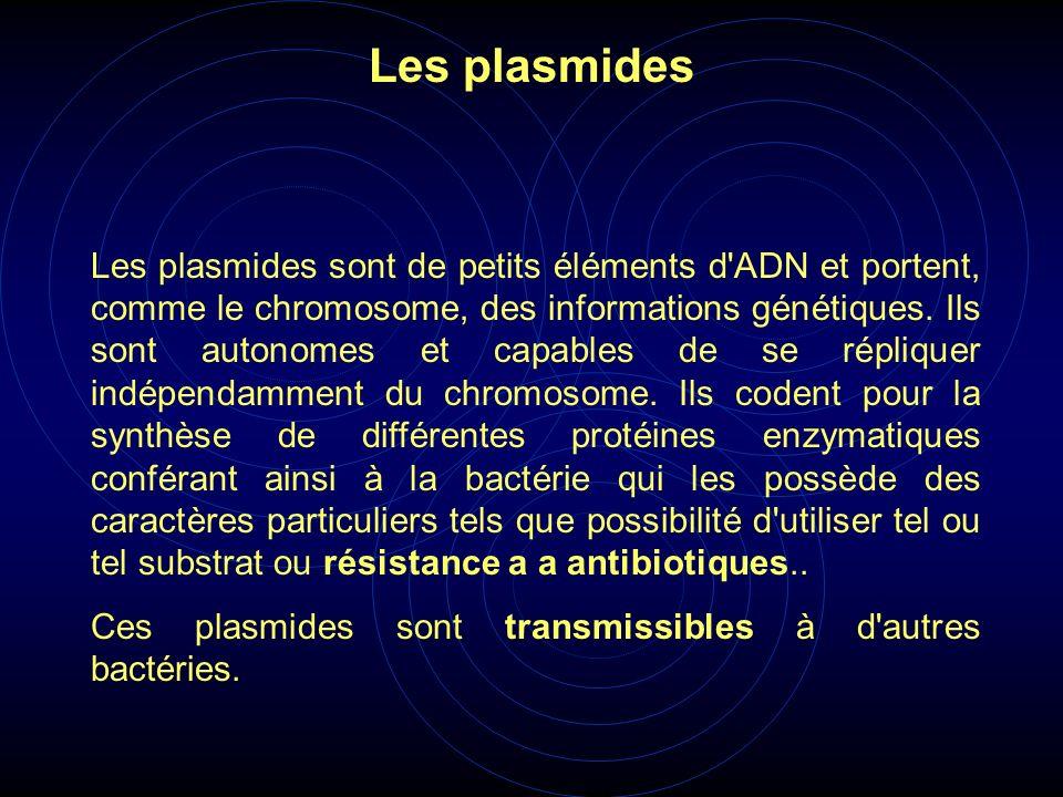 Les plasmides sont de petits éléments d'ADN et portent, comme le chromosome, des informations génétiques. Ils sont autonomes et capables de se répliqu