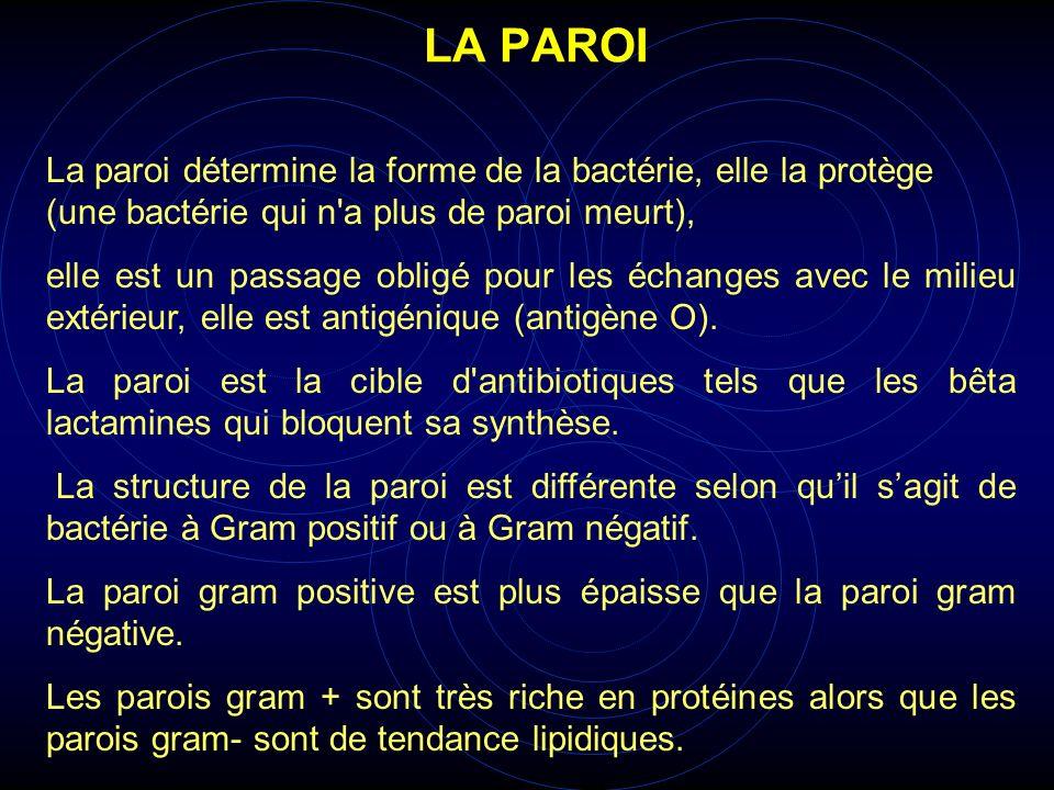 La paroi détermine la forme de la bactérie, elle la protège (une bactérie qui n'a plus de paroi meurt), elle est un passage obligé pour les échanges a