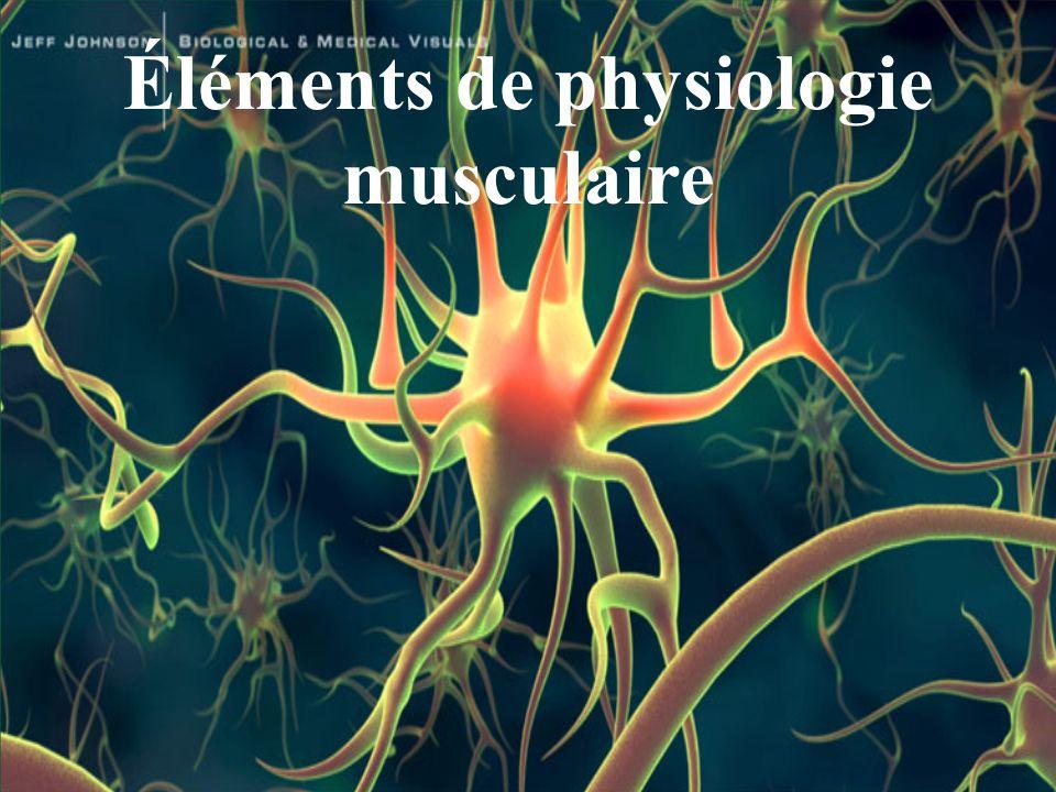 Éléments de physiologie musculaire